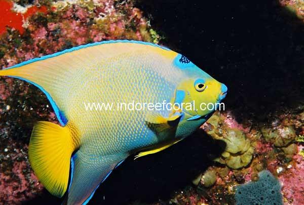 Marine Fish-10