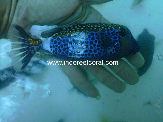 Marine Fish-2