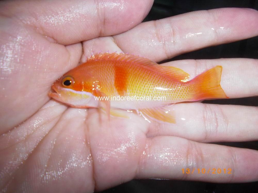 Marine Fish-3