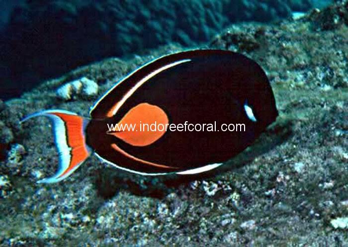 Marine Fish-4
